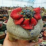 꽃담수제화분|