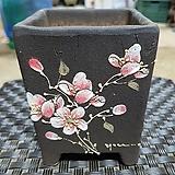 다나화분  - 꽃그림  랜덤발송|Echeveria Donna