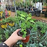 레몬나무 열매류식물 소품|