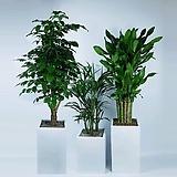 거실화분 도자기화분에 사진그대로갑니다 공기정화식물 선물용 사무실 책상위 관엽식물|