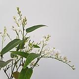흰싸리중품2번 (48cm/사진배송)|