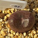 마우가니 교배종 33 |Conophytum maughanii