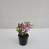 경홍복륜/공기정화식물/온누리 꽃농원|