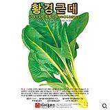 (근대씨앗종자) 황경근대, 황근대(5g,250g) 