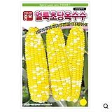 옥수수씨앗종자 얼룩초당옥수수(2182MR)(2000립)-바이칼라 