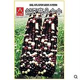 (아시아종묘/옥수수종자씨앗) 설중흑(700g) 