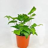 스파트필름믹스 스파트필름mix 센세이션+데이글로 공기정화식물 한빛농원