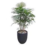 종려죽(고급폴리분) 카페인테리어 대형식물 호텔로비식물 축하화분 DLP-286|