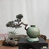 향나무 주입청자항아리(소) 분재 도자기화분 사어천 나무분재 ST-111|
