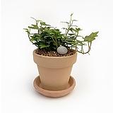 아이비 이태리 토분 공기정화식물 고급화분 인테리어 실내화초|