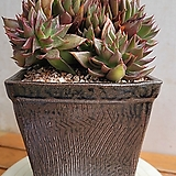 수제사각화분(식물은 이미지) 