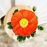 김규리플라워/ 볼수록 빠져드는 꽃양귀비 (개양귀비) 색상랜덤|