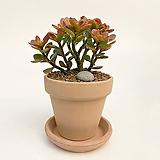 아이비 이태리토분 공기정화식물 고급화분 인테리어 실내화초|