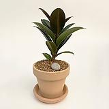 고무나무 이태리토분 공기정화식물 고급화분 인테리어 실내화초 |