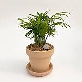 테이블야자 이태리토분 공기정화식물 고급화분 인테리어 실내화초|
