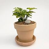 싱고니움 이태리토분 공기정화식물 고급화분 인테리어 실내화초 |