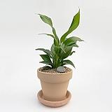 스파트필름 이태리토분 공기정화식물 고급화분 인테리어 실내화초 |