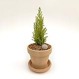 율마 이태리토분 공기정화식물 고급화분 인테리어 실내화초|