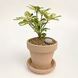 무늬홍콩야자 이태리토분 공기정화식물 고급화분 인테리어 실내화초|