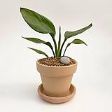극락조 이태리토분 공기정화식물 고급화분 인테리어 실내화초|