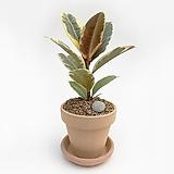 수채화고무나무 이태리토분 공기정화식물 고급화분 인테리어 실내화초|