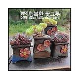 구들[데이지]/맥반석화분/행복한꽃그릇|