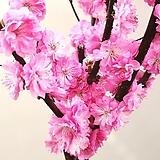 외목수형 옥매화나무 화분상품,멋진 수형 옥매화 꽃나무,핑크꽃 매화|