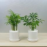 미니식물1+1 축하선물고민NO 품격과센스를담은 화분으로 선물하세요 미세먼지잡는 공기정화식물 책상위 관엽식물 