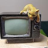 가든데코(TV)|