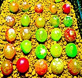 리톱스 믹스 씨앗(100립)-280여종이 섞여 있어요/리톱스씨앗/다육이 씨앗/리톱스다육이분갈이흙화분|Lithops
