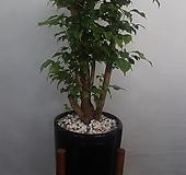 녹보수(오브제)|happy tree