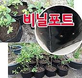 [흑비닐 포트 )] 묘목 재배용, 비닐포트, 연질재질 