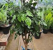 녹보수 외목대|happy tree
