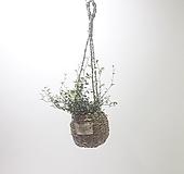 트리안 (소) 행잉 바구니 *쟈스민 식물*|