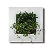 트리안3개+쿠페아3개 식물액자용 공기정화 식물 패키지|