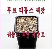 리톱스씨앗 파종토|Lithops