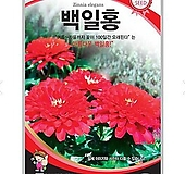 꽃씨앗 백일홍 100립|