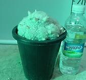백섬분홍꽃 선인장-물은한달에한번-동일상품배송|