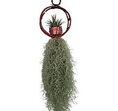 꽃과나무 ] 바구니 수염틸란드시아 / 수염 / 틸란드시아 / 관엽 / 공기정화 / 관상용 / 그린테리어|