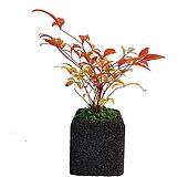 남천나무 숯화분 공기정화식물 가을식물|