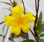 [진아플라워] 천진난만 노란꽃 개나리 쟈스민  099|