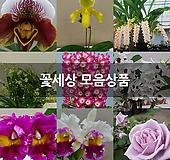 꽃세상 모음상품 
