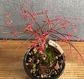 금사남천-운주|variegated