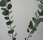 웹스테리아나,하트 유칼립투스C1940-외목대,동일품배송 