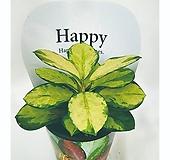 행복가득 반려식물 해피호야 - 김규리플라워|