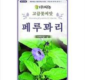 페루꽈리(살충초) 허브씨앗 [1000립]|
