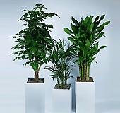 거실화분 사진그대로갑니다 공기정화식물 선물용 사무실 책상위 관엽식물 