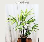 서황금 - 김규리플라워|variegated