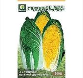 고려금동이미니배추 [300립]|variegated
