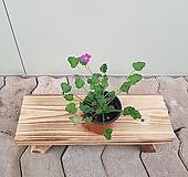 풍로초(소품)  